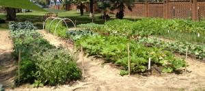 Amrit Yoga Institute Garden