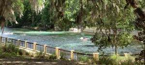 Salt Springs, Ocala National Forest,  Florida