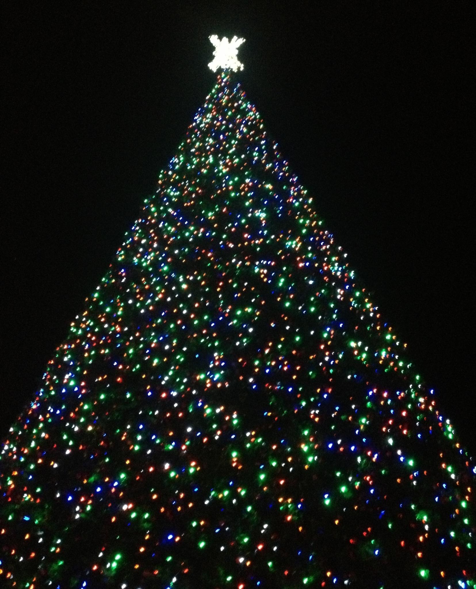 Delray Christmas Tree Lighting 2021 Inside The Christmas Tree Gina Pacelli Gina Pacelli