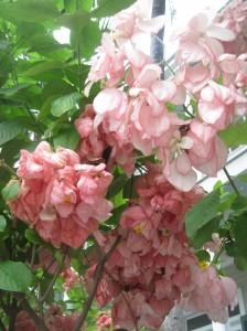 Hemingway Flowers