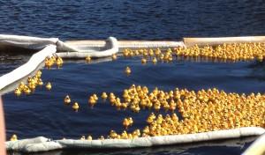 Duck Fest Derby Ducks