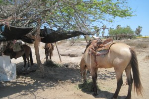 Cabo: Birds, Locals, and Horses