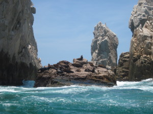 Seals in Cabo