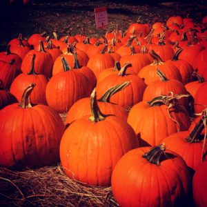 Pumpkins at Russell Orchards