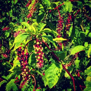 Berries at Russell Orchards
