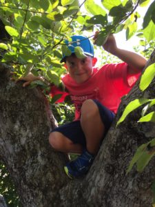 Boy in a Tree at Russell Orchards