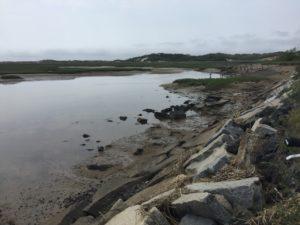 Harbor in Provicetown