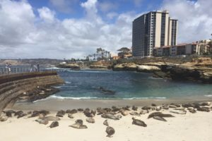Playful Seals at La Jolla Cove, California