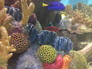 Tropical Fish, New England Aquarium
